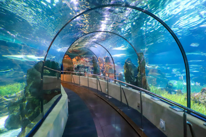 Aquarium of Barcelona Picture Courtesy of Civitatis e1562152515935 Children friendly activities in Barcelona