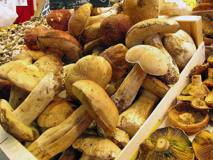 Mushrooms in La Boquería market by Marlis1 flickr e1539854171620 November in Barcelona