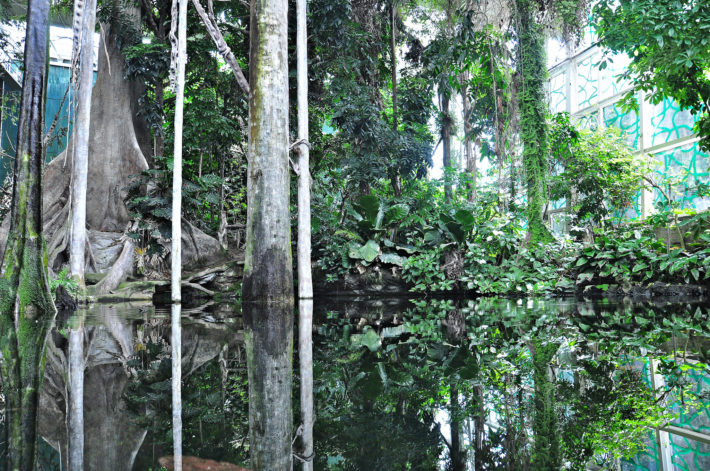 The flooded forest in CosmoCaixa by Alberto Gonzalez Rovira Flickr e1538578420304 Fun Way to Learn   CosmoCaixa Museum